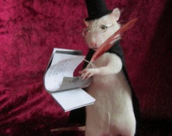 taxidermy curiosity writer taxidermy rat rat cabinet of curiosity odditties