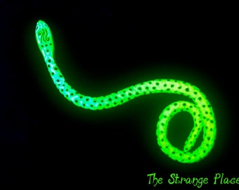 Psychedelic, neon glow, glow in the dark snake (small)