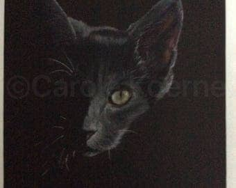 """Burmese cat portrait, """"Out of the shadows"""""""