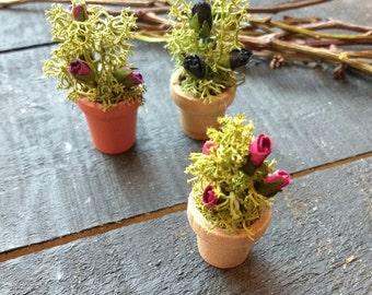 Miniature Potted Rose Bush