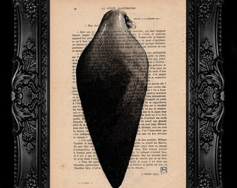 Crow. Nº 15. Pencil and ink drawing on page of French publication of the 1930 illustration. The measurement of the leaf is 28 x 19 cm.
