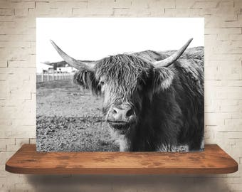 Scottish Highland Cattle Photograph - Fine Art Print - Black White Photography - Wall Art Decor - Farm House Decor - Cow Pictures - Cows