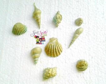 ocean inspired toppers, fondant seashells,  sugar seashells,  beach toppers, cake decorations, cupcake decorations, cupcakes, fondant, cakes