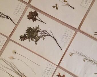 Vintage herbarium set #11
