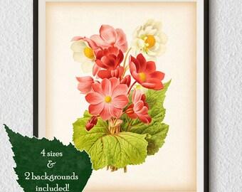 Wall art printable, Helleborus, Printable artwork, Botanical Art Prints, Botanical Illustration, Antique wall art, Digital print, Art, #12