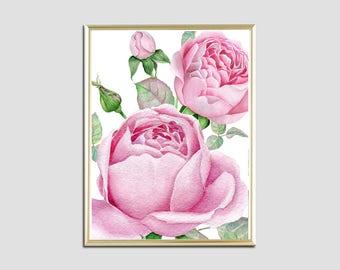 Wall art print roses print watercolor print roses bouquet flowers pink roses print floral print download digital poster botanical print 8x10