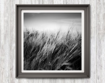 Summer Breeze, Print Download, Black and White Photography, Nature Photography, Abstract Black White Photoart, Home Office Hotel Decor