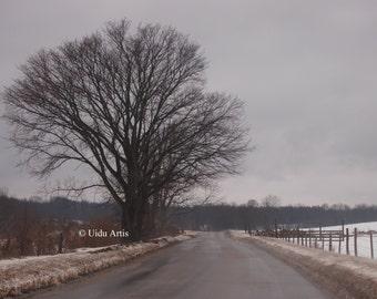 Oaken Road, forest, woods, countryside, tree, trees, snow, winter, landscape, original art, upstate New York