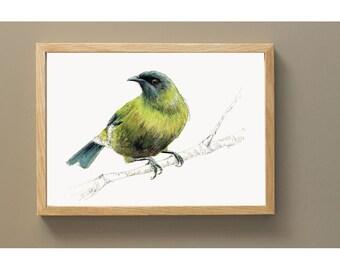 New Zealand native bird Korimako (or Bellbird) illustrated Large print from original watercolor and ink painting artwork, Wild life wall art