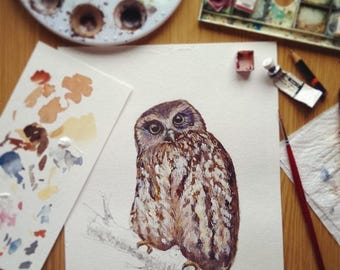 Ruru (or Morepork) illustrated New Zealand native owl - Large print, from original watercolor and ink painting artwork, Wild life wall art