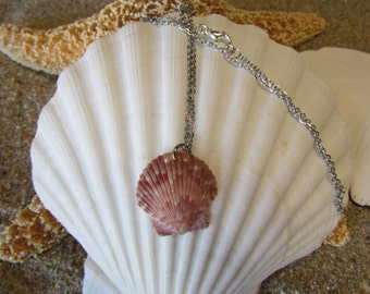 Baby Seashell Necklace- Mermaid Necklace, Nautical Necklace, Beach Jewelry, Mermaid Locket, Mermaid Accessories