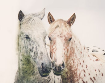 "Horse Art, White Horse Decor, Nature Photography, Large Wall Art Print, White Wall Decor, Fine Art Photography Print ""Moor Love"""