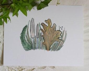 Pastel Fungi.