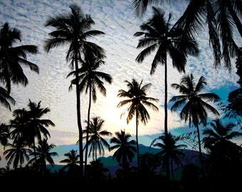 Palm trees in Sri Lanka