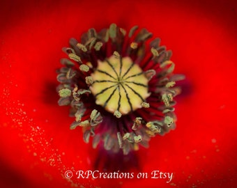 Digital Download - Inside a Poppy