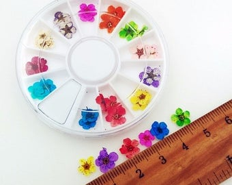 30 Pcs Mini Pressed Dried Flowers with Plastic Container