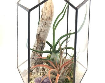 Geometric Terrarium Kit with Tillandsia Air Plants
