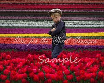 Tulip Field Digital Backdrop