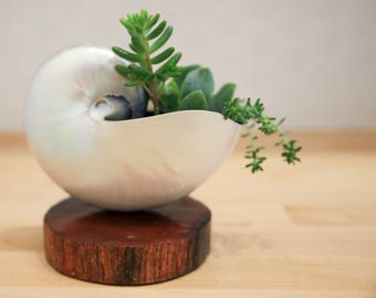 Pearled Nautilus Shell Planter