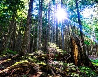 """Forest Print, Green Sunbeam Scenic Nature Photograph 8""""x10"""" Framed Wall Art"""