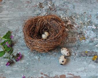 Real Natural Bird's Nest, natural décor, crafts supply, fairy or terrarium garden decor, ornithologist's collection exhibit