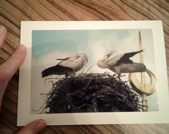 Stork's nest rattle Stork postcard