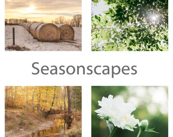 Seasonscapes Color Framable Note Cards