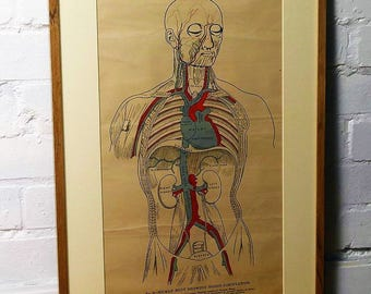 Selection of Anatomical posters charts medical vintage macabre antique wall art dentist industrial