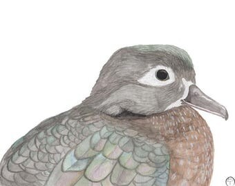 Wood Duck, watercolor painting, bird print, natural art, bird painting, wall art