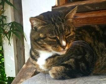 Copper socks the cat, blank greeting card