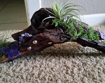 Beautifully decorated tree bark with air plants, and purple beads