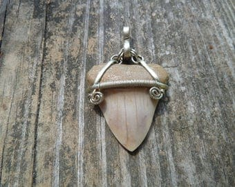 Megalodon tooth, fossil necklace