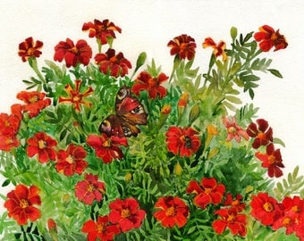 Red flowers marigolds and butterfly. ORIGINAL WATERCOLOR PAINTING