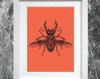 Stag Beetle A4 Print