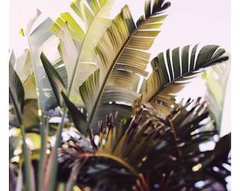 Nature Photography  - Green Art - Paradise #1 - Fine Art Print - Green Leaf Print - Banana Leaf - Botanical Art - Oversize Art - Tropical