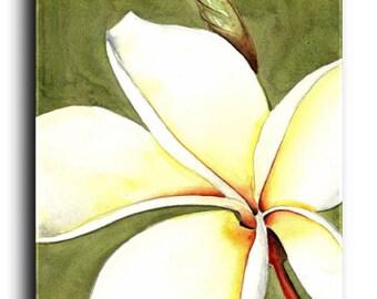 Gallery Canvas and Fine Art Prints Tropical White Plumeria Flower Still life Elena
