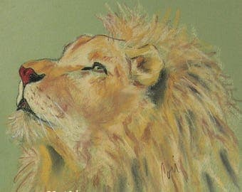Lion Art Wildlife Pastel Drawing By Cori Solomon