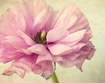 Pink Ranunculus Photograph, Floral Art Print, Floral Wall Decor, Nature Photography, Nursery Wall Art, Flower Photography