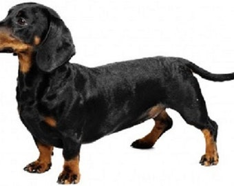 DACHSHUND Black & Tan Smooth Dog (Full Body) on Twelve Identical 6 inch Fabric Squares for Quilting and Sewing