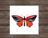 Beauty: Butterfly art print