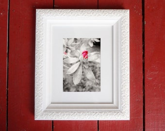 Photograph: Pink Flower Bud Nature Photo 5x7 Print
