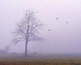 "Landscape photography fog print nature purple lavender tree  birds minimal - ""Foggy afternoon""  8 x 10"