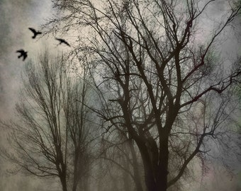 "Cemetery landscape photography birds surreal dark gothic graveyard grey blue black - ""Forgotten"" 8 x 10"