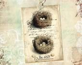 Tags, Bird Nest, Gift Tags, Nature, Nest Specimen, Eggs, Nesting, Party Favors, Bird Lover