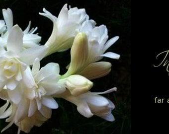 Tuberose Perfume velvety soft floral exotic incense