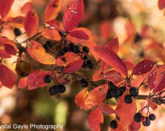 Fall Leaves Picture, Canadian Nature Photography, Botanical Wall Art Print, Nature Themed Decor, Rustic Farmhouse Decor,