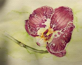 Original Orchid painting, Botanical art, watercolors, exotic flowers, purple Phalaenopsis, Botany, garden