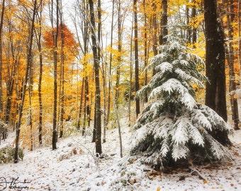 Foliage and Snow Print