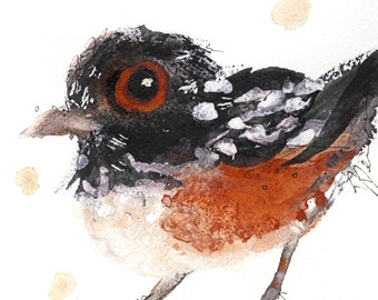5 x 5  Bird Art, Spotted Towhee, Bird Art Print