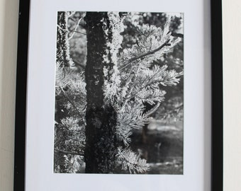 black and white nature photography, vintage photography, outdoor photography, black and white photograph